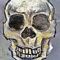 Virgin Skull  by Clark  Holladay
