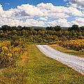 Yesterday - Virginia Country Road by Carol VanDyke