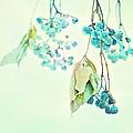 Virginia Creeper Berries by Theresa Tahara