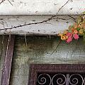 Virginia Creeper In Fall Colors by Tamara Gentuso