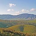 Virginia Mountains  by Cynthia Guinn