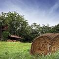 Virginia Tobacco Barn by Benanne Stiens