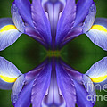 Visionary Meditation by Inspired Nature Photography Fine Art Photography