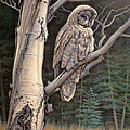 Visitor From The North-great Grey Owl by Paul Krapf