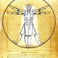 Vitruvian Cyberman by Helge