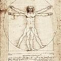 Vitruvian Man. 1492. Renaissance Art by Everett