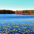 Vivid Fall Colors by Susan Wyman