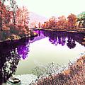 Vivid River by Curtis Stein