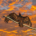 Vivid Vulture by Al Powell Photography USA