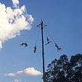 Voladores El Tajin Mexico by John  Mitchell