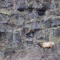 Volcanic Formation And Elk by Angela Stout