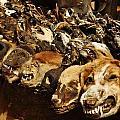 Voodoo Fetish Market by Manu G