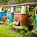Vw Buses by Carolyn Marshall