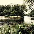 Waccamaw River by Michele Nelson