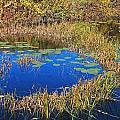 Wachusett Meadows 2 by Michael Saunders