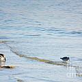 Waders Walking The Beach. by Jan Brons