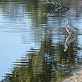 Wading Bird by Linda Kerkau