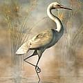 Wading Egret by Daniel Eskridge