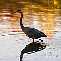 Wading For You by Judy Wolinsky