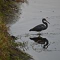 Wading by Linda Kerkau