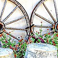 Wagon Wheel Flowers by Audreen Gieger