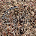 Wagon Wheel_7438 by Joseph Marquis