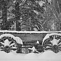 Wagon Wheels June Lake by Christine Owens