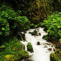 Wahkeena Creek by Jeff Swan