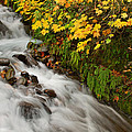 Wahkeena Falls At Columbia River Gorge In The Fall by Jit Lim