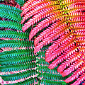 Waikamoi 47 by Dawn Eshelman