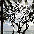 Waikiki Beach Hawaii Usa by Eva Kaufman
