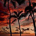 Waikiki Sunset by David Smith