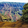 Waimea Canyon - Kauai by Barbara Zahno