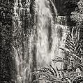 Wailua Waterfall 3 by Bob Phillips