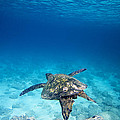 Turtle Soar by Sean Davey