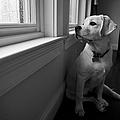 Waiting by Diane Diederich