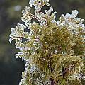 Waiting For Spring - Ice Storm - Closeup 2 by Barbara Griffin