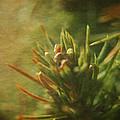 Waiting For Spring 4 by Rhonda Barrett