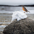 Waiting For Spring by Bill Wakeley
