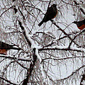 Waiting For Spring by Kathy Bassett