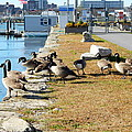 Waiting For The Ferry by Kathy Barney