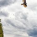 Waiting Turkey Vultures by Steve Harrington