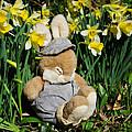 Wake Up It's Springtime by Susie Peek