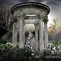 Wake Up My Sleepy White Roses - Sunlight Version by Peter Awax