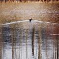 Waking Ducks by Mary Tevebaugh