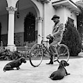 Waldemar Schroder On A Bicycle With Two Dogs by Luis Lemus