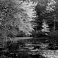 Walden Pond by Christian Heeb