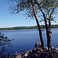 Walden Pond Saugus Ma by Barbara McDevitt