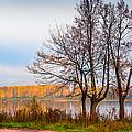 Walk Along The River Bank by Jenny Rainbow
