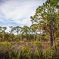 Walk Among The Pines by Raymond Poynor